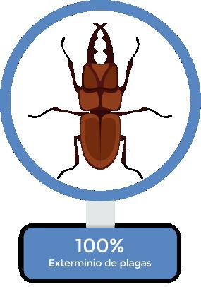 exterminacion-de-plagas-en-puebla-12