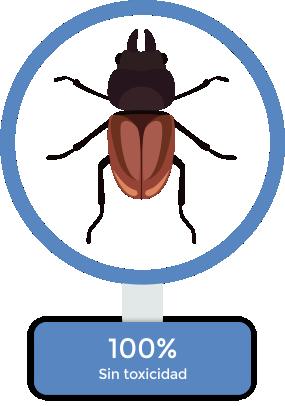 exterminacion-de-plagas-en-puebla-14